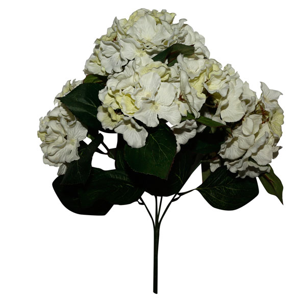 Гортензия цветы купить минск, белых роз спб