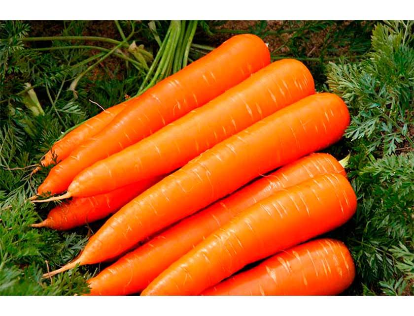 Купить Семена Морковь Император 8 м